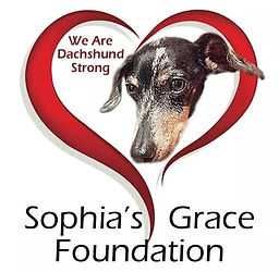 Available Dogs | Sophia's Grace Foundation Dachshund Rescue