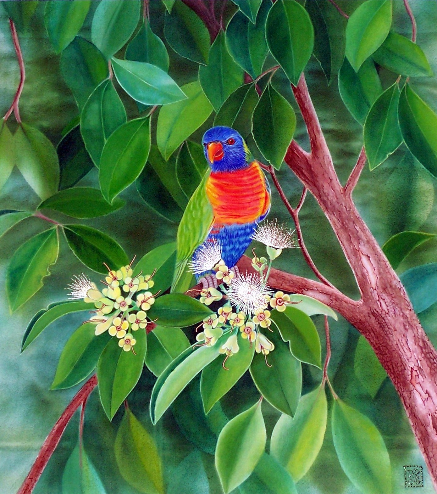 1-5-Rainbow lorikeet in front garden
