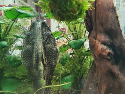Fish Tank at Friends Forever Pet Food Store in Kirkland WA