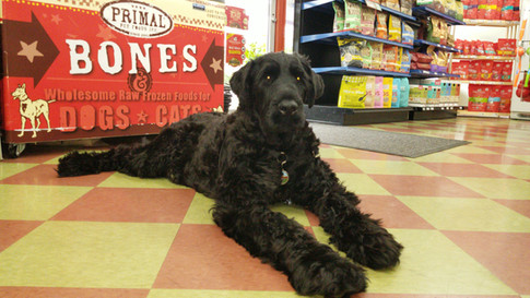 Working hard at Friends Forever Pet Food Store In Kirkland WA