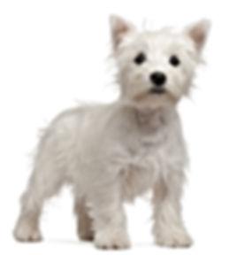 Friends Forever Pet Pet Store in Kirkland  98033