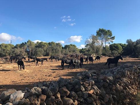 L'empreinte durable sur l'île de Minorque | Menorca Island by Lodge Attitude