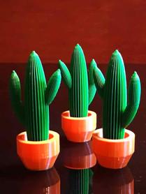 cactus miniatura