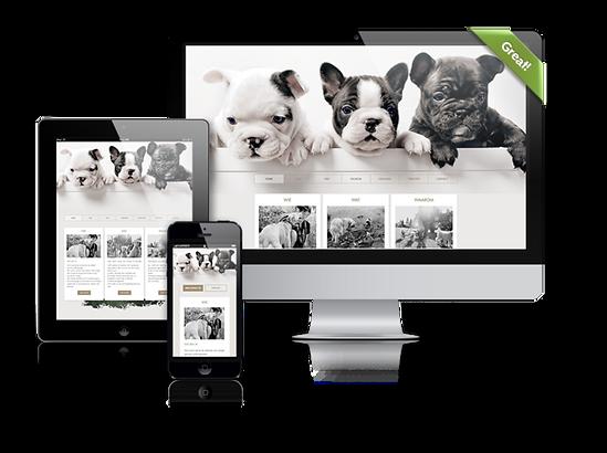 BloomCool-websites-mock-up