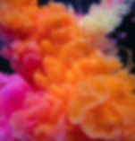 rawpixel-781987-unsplash.jpg