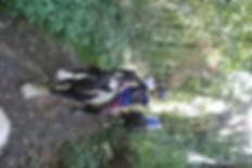 DSC_4003 (800x536).jpg