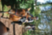 DSC_4270 (800x536).jpg