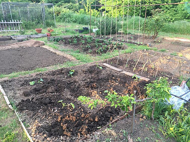Allotment 2.jpg