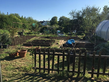 Allotment 1.jpg