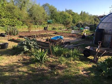 Allotment 3.jpg