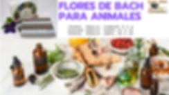 FLORES DE BACH PARA ANIMALES.png