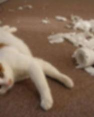 gatos-comportamiento-destructivo.jpg