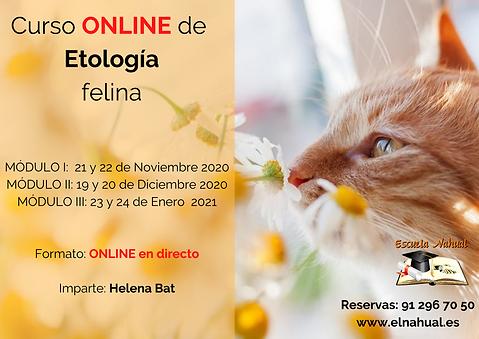 Curso_de_Etología_Felina.png