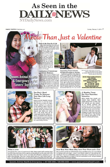 Veterinarian Feature