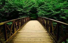bridge-in-woods_edited_edited.jpg