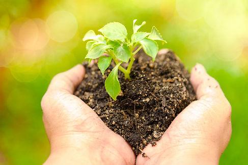 manos-mujer-joven-sosteniendo-planta-joven_10589-145.jpg