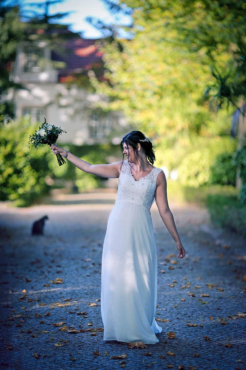 o Gato e o Bouquet
