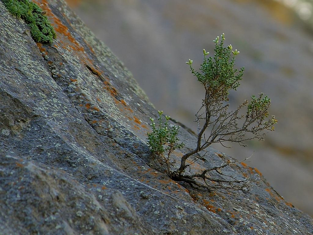 Seedling sprouting out of a rock
