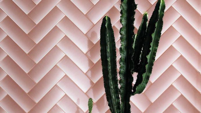 pink shades of blind.jpg