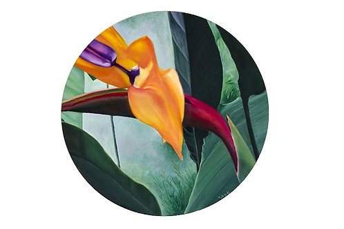Bird of Paradise Flower Pictures- Devotion