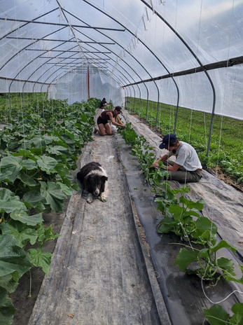 Pruning in the greenhouse with Collie