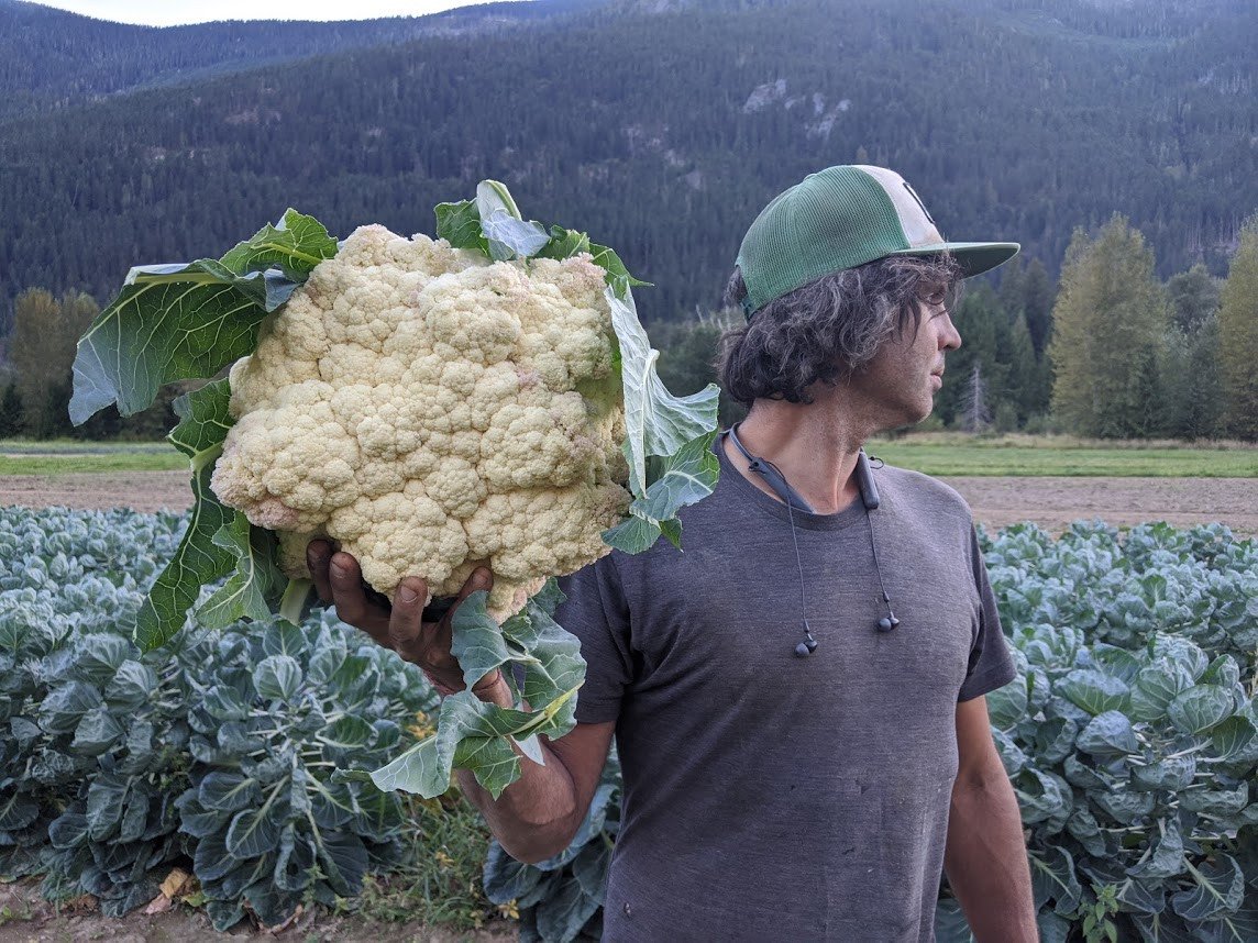 Biggest cauliflower we've ever grown