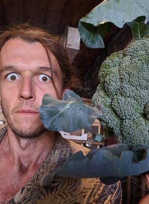 Veggie Box #11, 2020