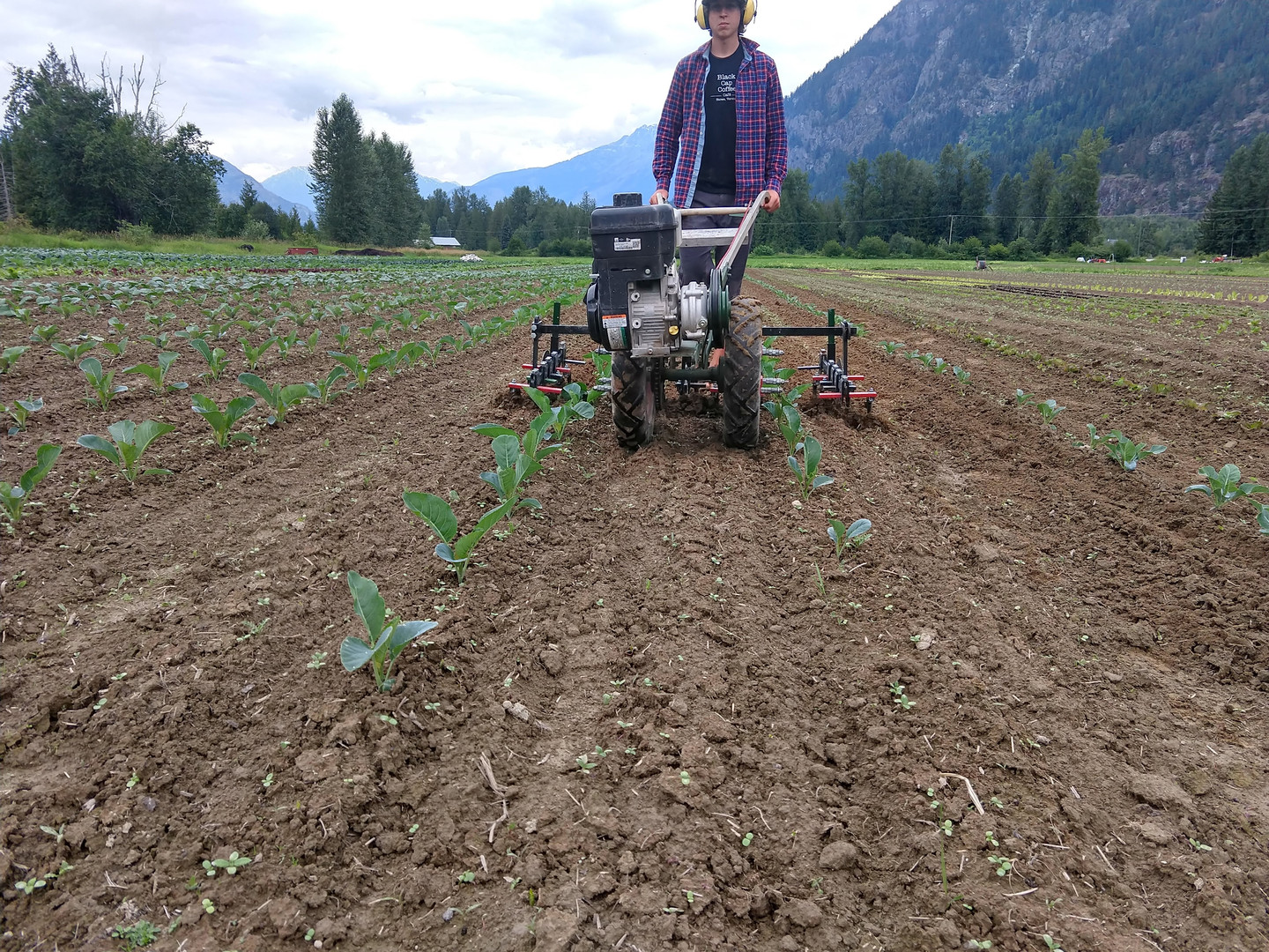 Sam cultivating brassicas 2019