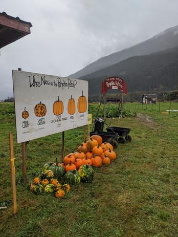 Pumpkins 12
