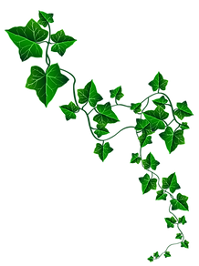 Ivy Leaf.png