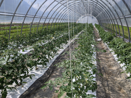 2020 Vegetable Deliveries are About to Begin