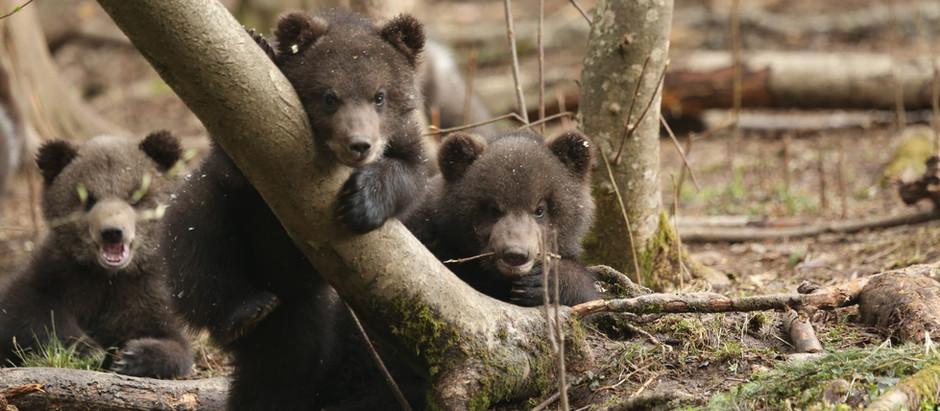 Orphan Bear Rescue Center