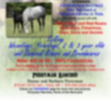 2019 Horse sale - Copy.png