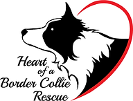Heart of a Border Collie Rescue