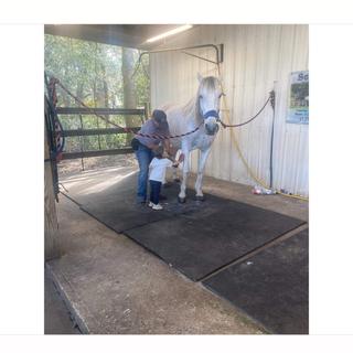 Hands- on Horse Bathing Workshop