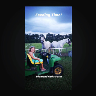 ATV tour of the pastures