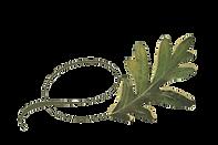 Twisty Swamp Oak Leaf.png