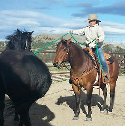 Working a clients horses in Deer Lodge M