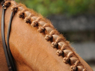Braiding and grooming workshop for all ages