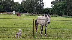 Gorgeous pasture views with horses to watch at this pet friendly Ocala FL horse farm