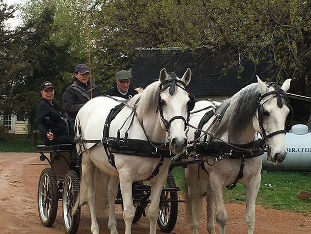 Carriage Rides: $100 for 1-4 passengers. Please inquire