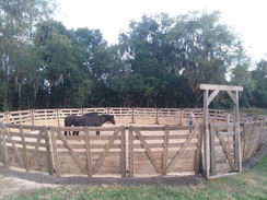 Arena and Round Pen Use