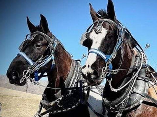 Horse Country Carriage rides for 1-4 people