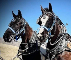 Horse Country Carriage  Ride