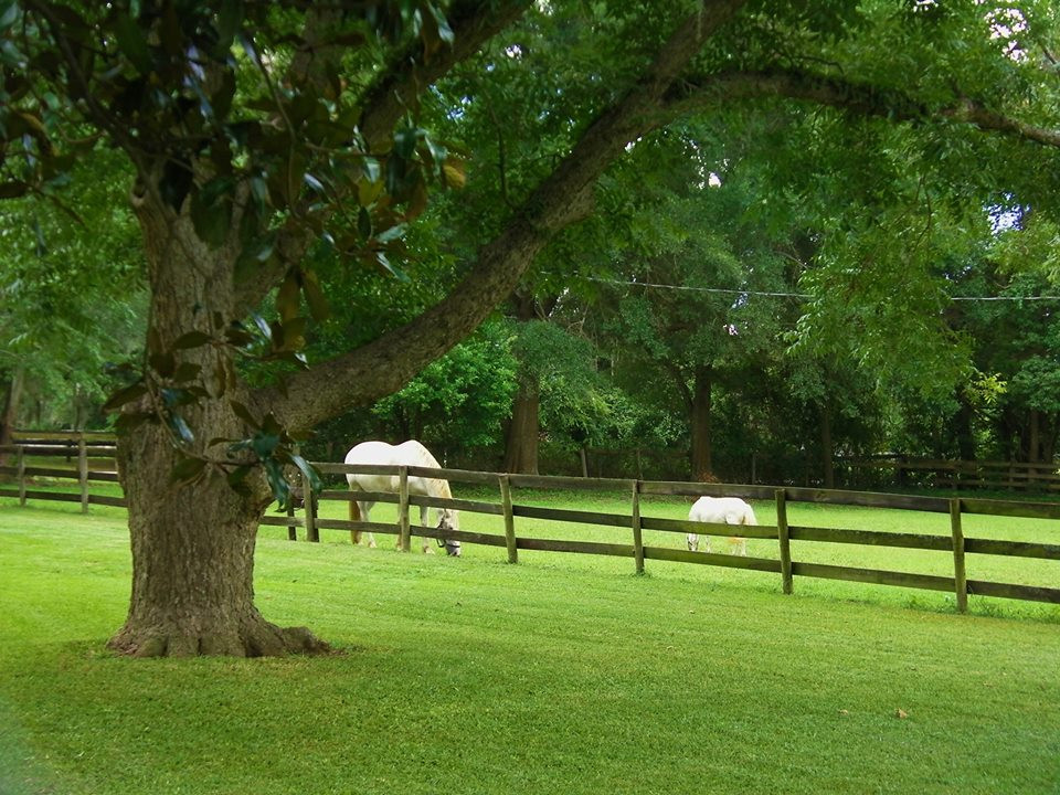 Pastoral Views with friendly horses