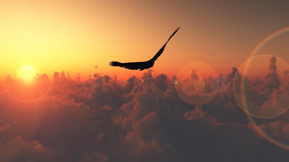 silhouette-Eagle-Wallpaper-HD.jpg
