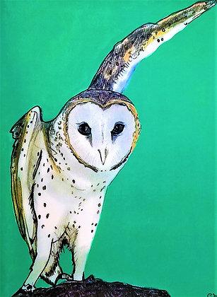 Native Animal Rescue: Abraham the Barn Owl
