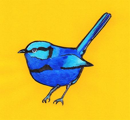 Purnell the Blue Fairy Wren