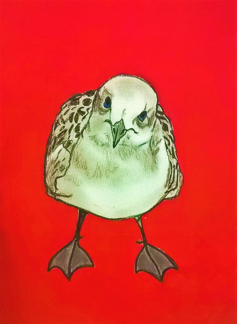Native animal rescue artworks Chips the seagull.jpg
