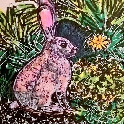 Bush Beach Bunny